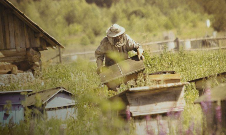Де отримати знання з бджільництва?