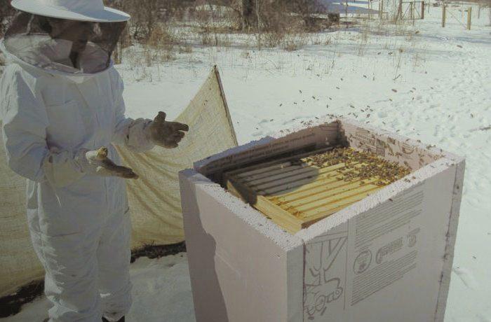 Весеннее сохранение тепла в пчелином гнезде
