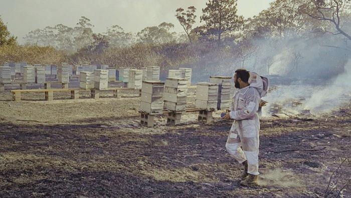 Австралийское пчеловодство восстанавливается после засухи и пожаров