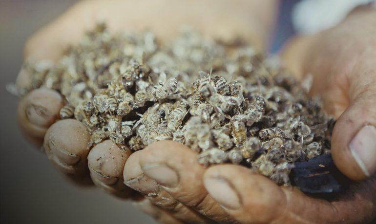 Массовая гибель пчел в Украине: как наконец решить проблему