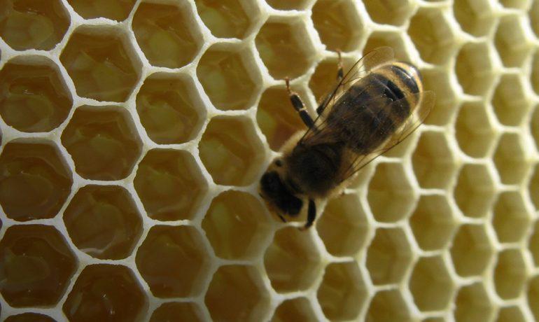 Международная конференция «Современные проблемы пчеловодства и апитерапии