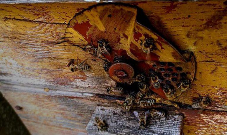 Сімейна справа бджільництво