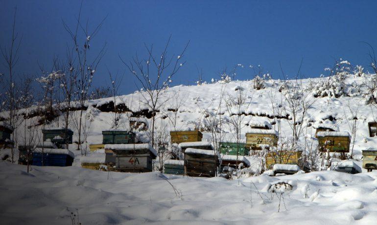 Уход за пчелами зимой