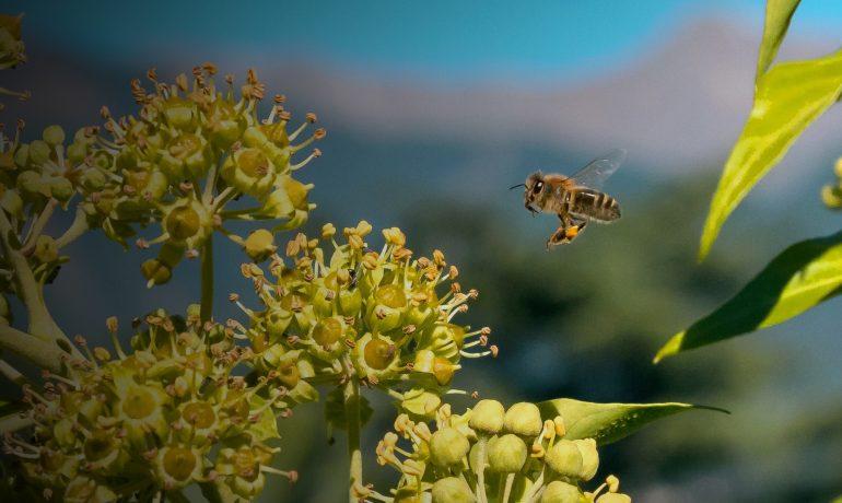Гени чистоплотності бджіл
