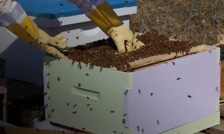 Пересадка бджіл