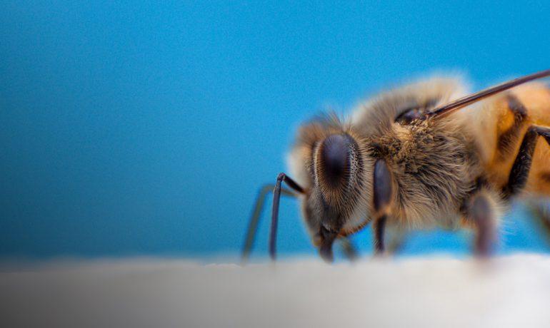 Подкормка пчел из полиэтиленовых пакетов
