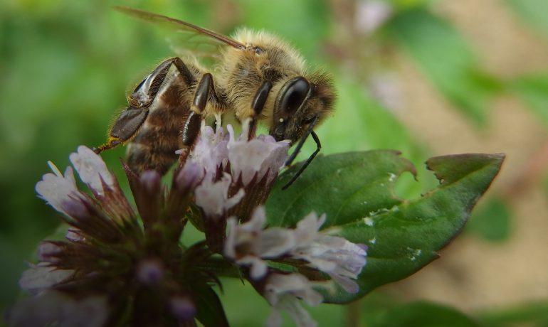 подсадка маток пчел