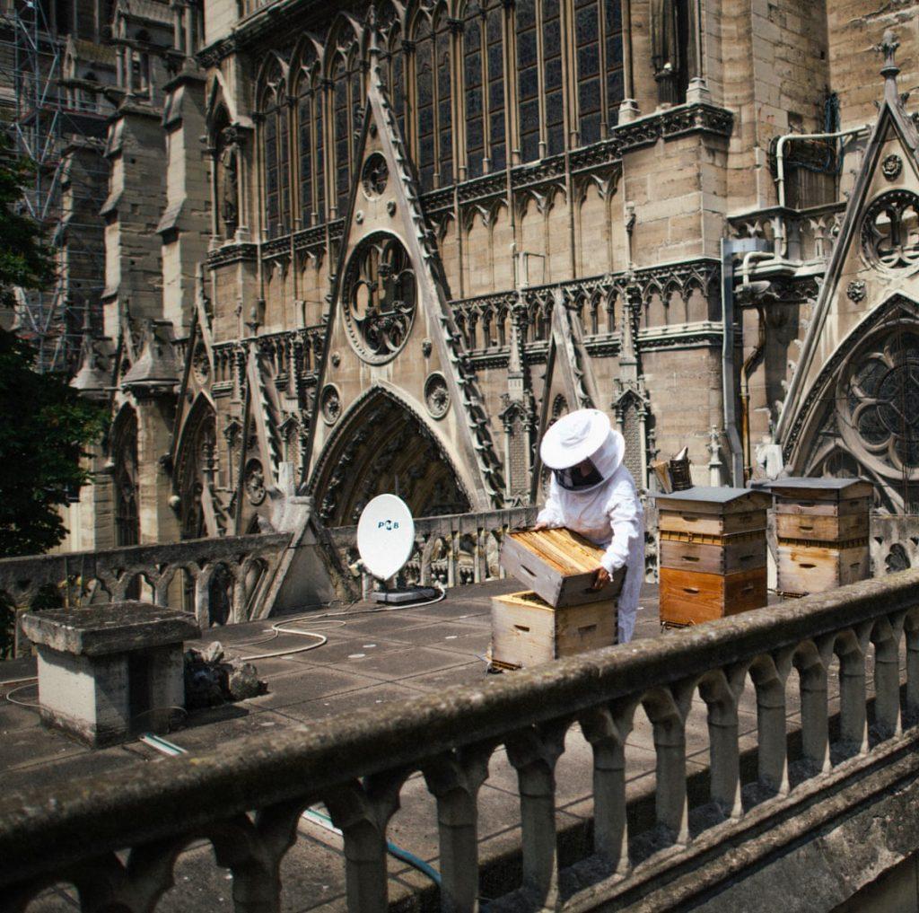 Бджоли собору Нотр-Дам
