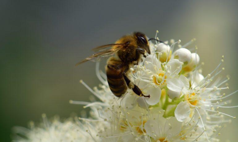 Білок і здоров'я бджіл