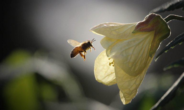 Коротко про бджіл