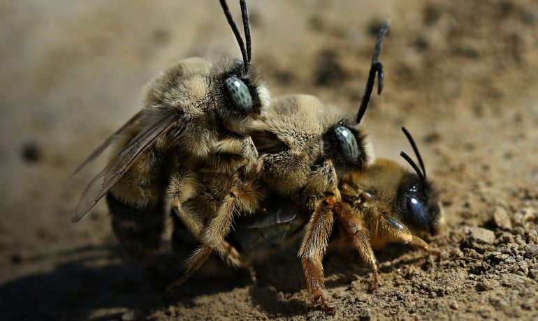 Непорочное зачатие пчел