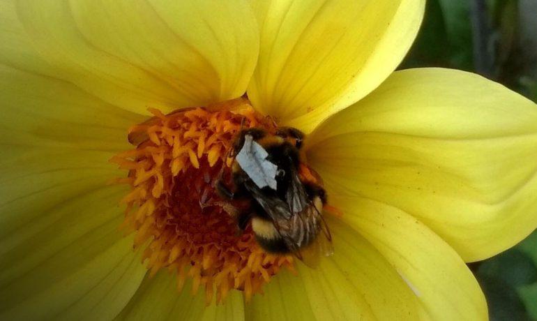 світловідбиваючі жилети для бджіл