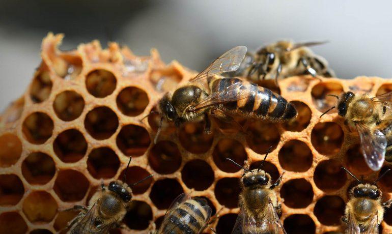 заміна маток бджіл