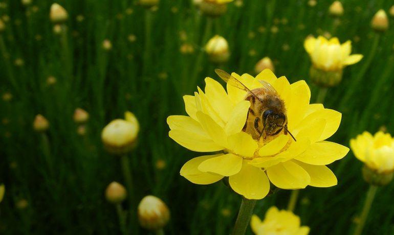 Бджоли вміють рахувати