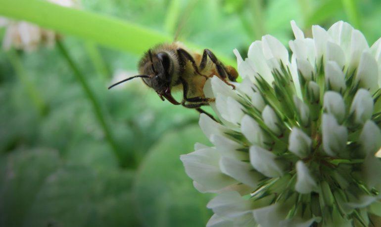 Харчові звички бджіл