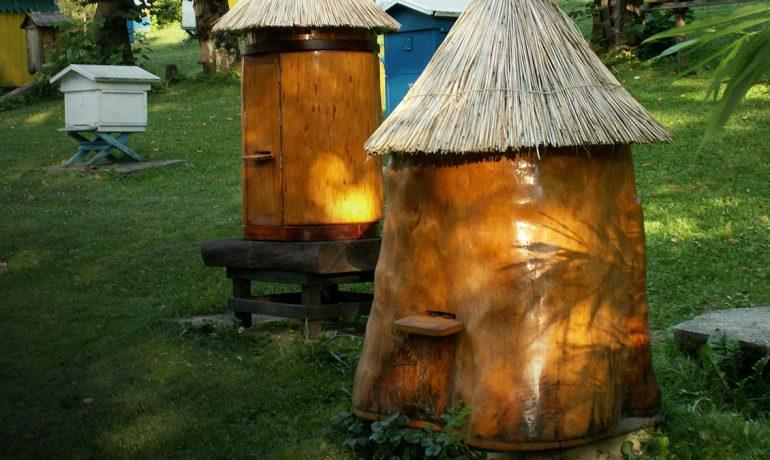 Колодне бджільництво