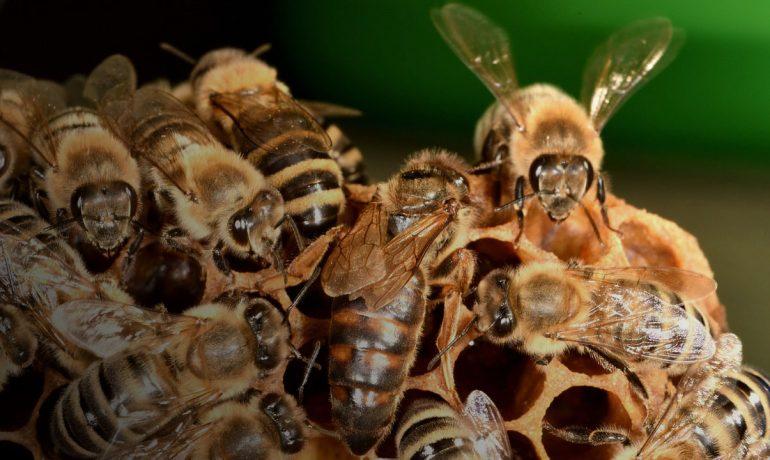 Матка для начинающего пчеловода