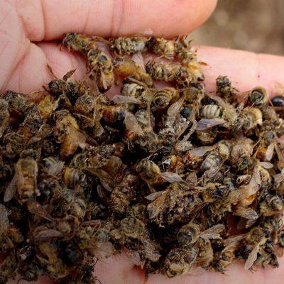 Відкрите звернення щодо массового отруєння медоносних бджіл