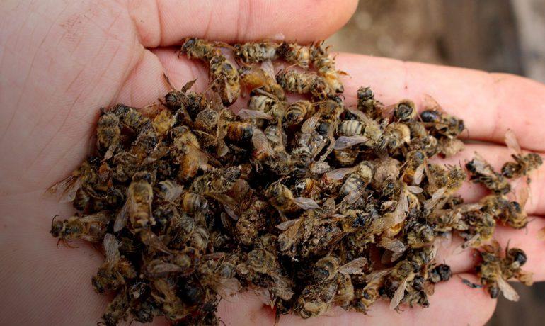 Отруєння бджіл