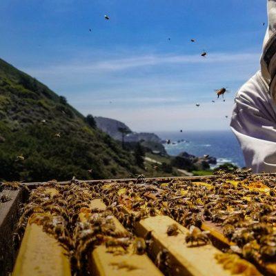Праця бджоляра на пасіці