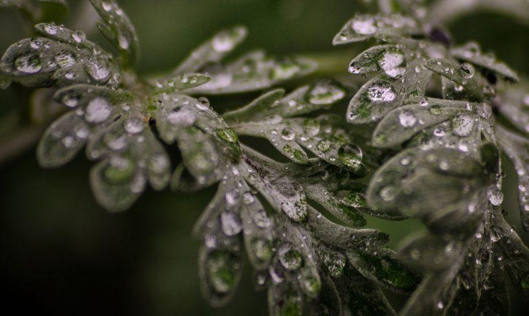 эфиросодержащие растения против клеща