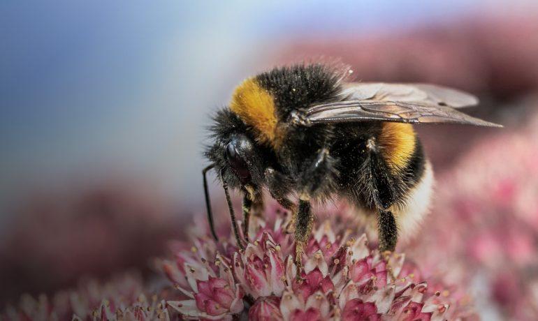 Бджільництво по-канадськи