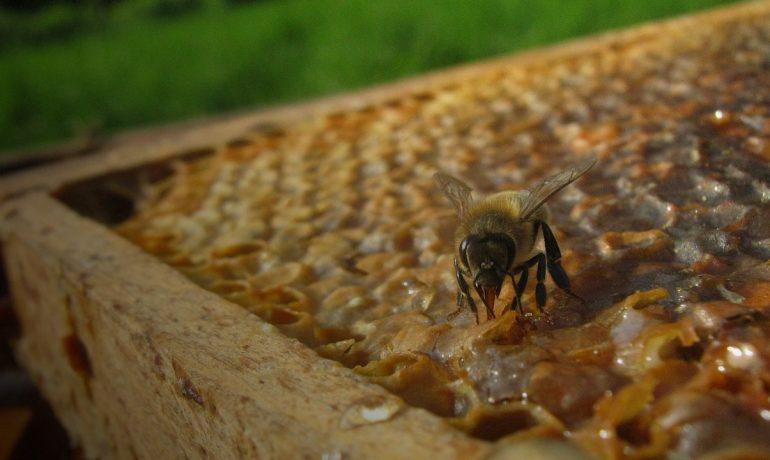 Будівельна рамка для бджіл