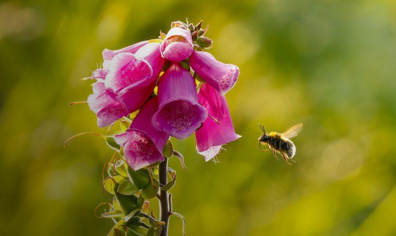 Кольоровий зір бджіл