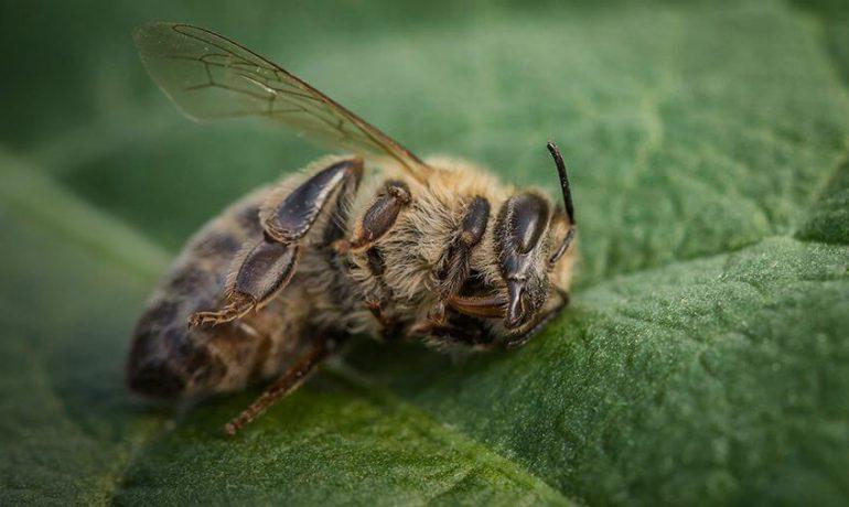 Отравление пчел пестицидами