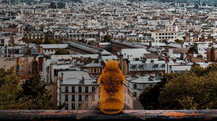 Пчела-блогер