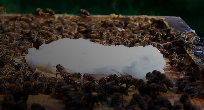 Подкормка пчел сахаром
