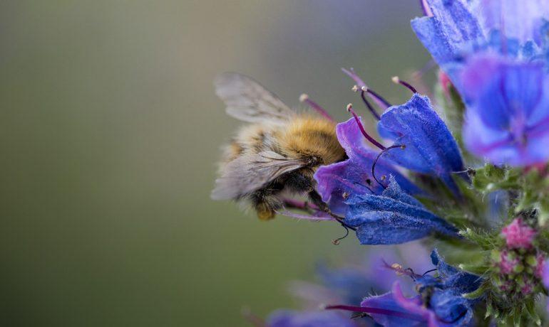 про бджіл
