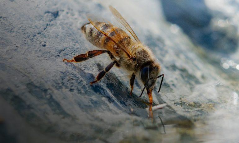 профілактика хвороб бджіл