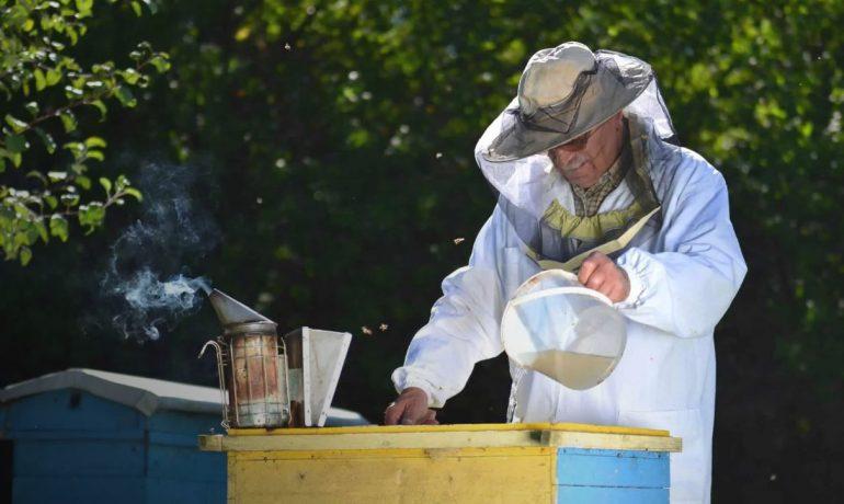 Розвиток бджолиних сімей
