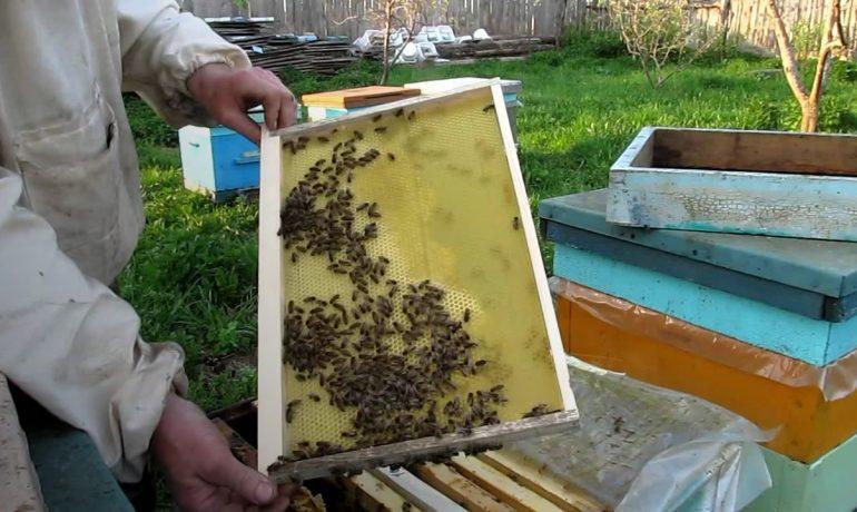 відбудувати стільники для бджіл