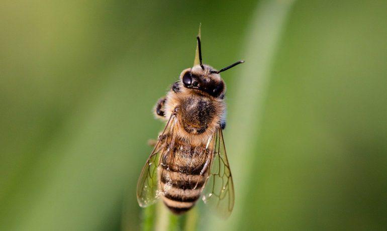 Загублені бджоли