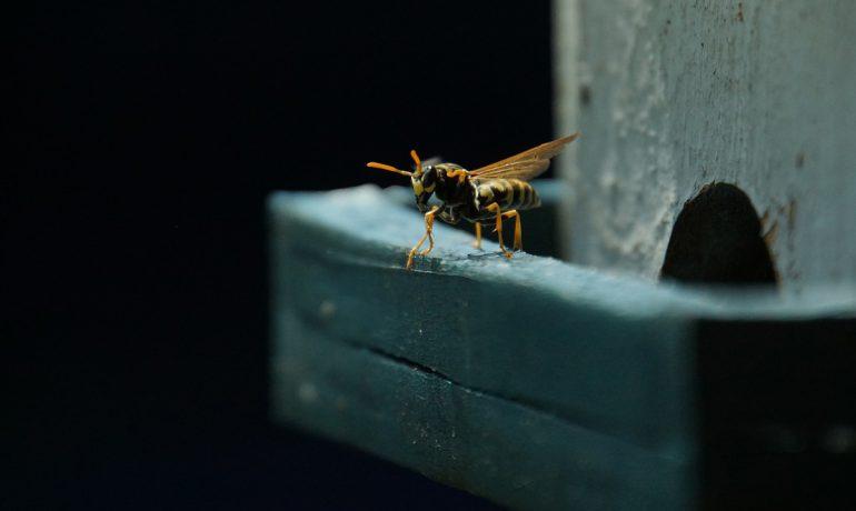 злая пчелиная матка