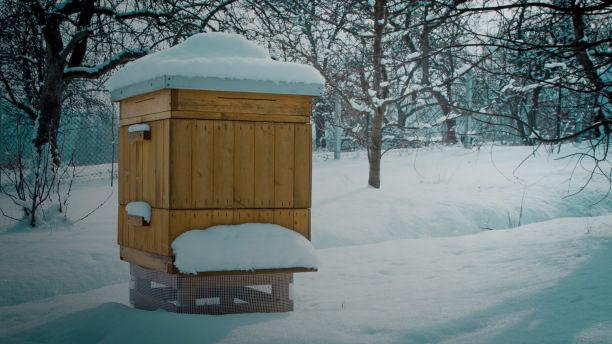 Зимние потери на пасеке