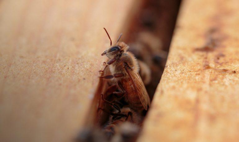 борьба с клещем пчел