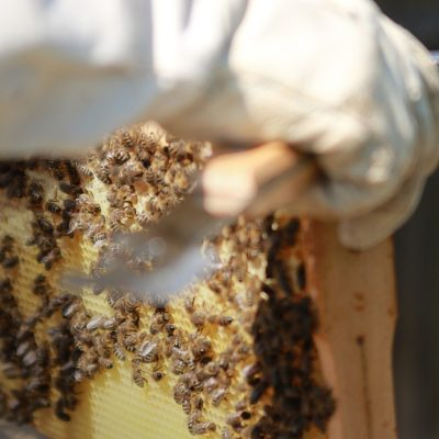 Кілька думок про людей, що з бджолами перебувають