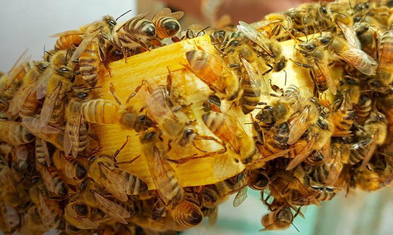 рамки для бджіл