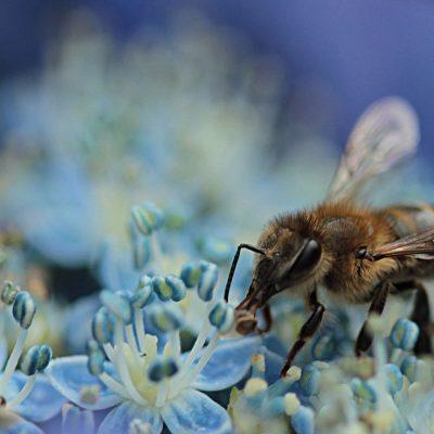 Успіх пасіки починається зі здорових бджіл