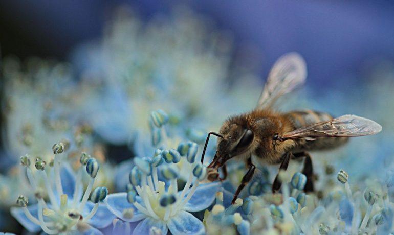 здорові бджоли