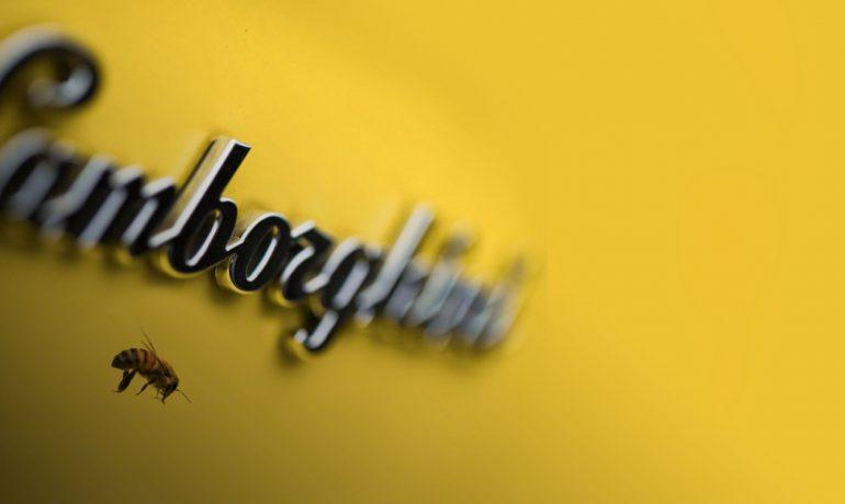 Lamborghini створили пасіку
