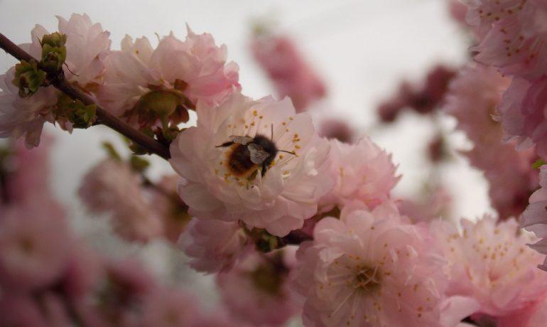 Бджільництво - 2021