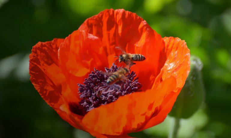 день бджіл