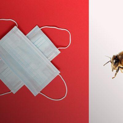 Вчені навчили бджіл виявляти коронавірус по запаху