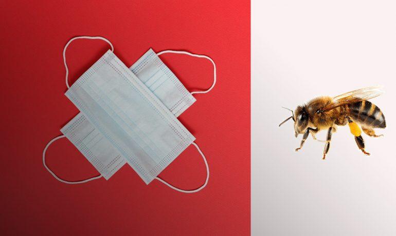 Коронавырус бджоли1