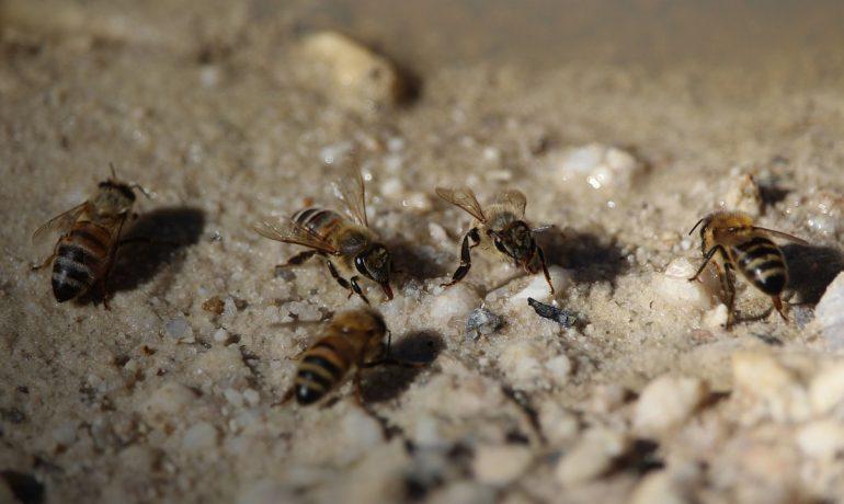 Підгодівля бджіл
