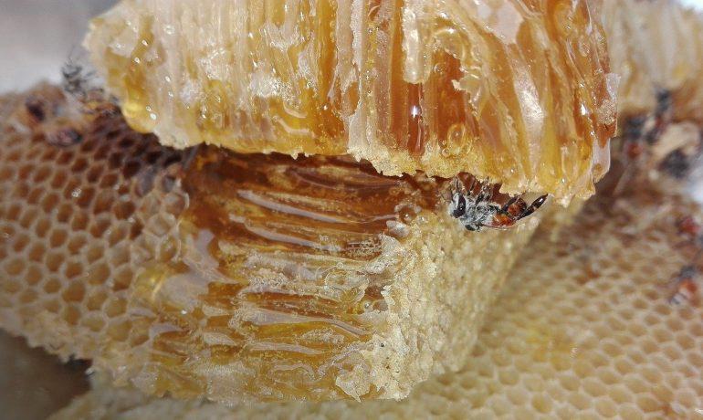 як бджоли роблять мед